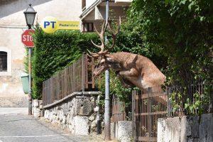 İtalya'nın En Mutlu Geyikleri Abruzzo Bölgesinde
